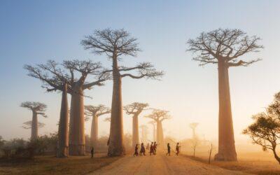 DANH SÁCH CÁC ĐỊA ĐIỂM NỔI TIẾNG KHI ĐI DU LỊCH MADAGASCAR